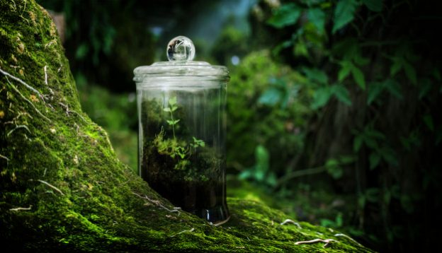 Green moss in glasshouse garden on rain forest fresh nature with collect nature in box Premium Photo